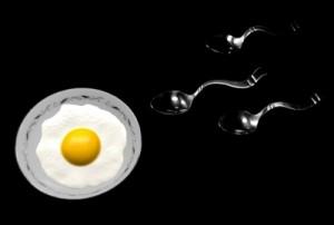 Befruchtung Ei