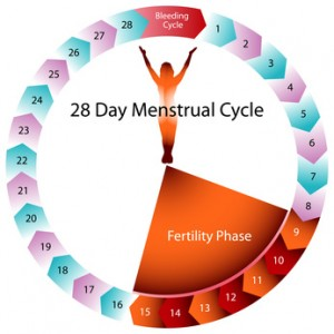 schnell schwanger werden, fruchtbare Tage berechnen